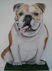 2 Rufus Bulldog
